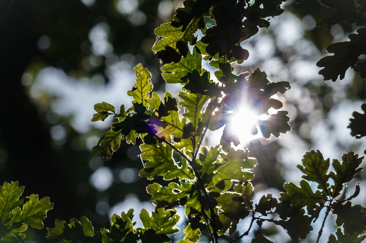 Pro svou zesnulou ženu vysázel tisíce dubů. Nyní sousedé chápou proč