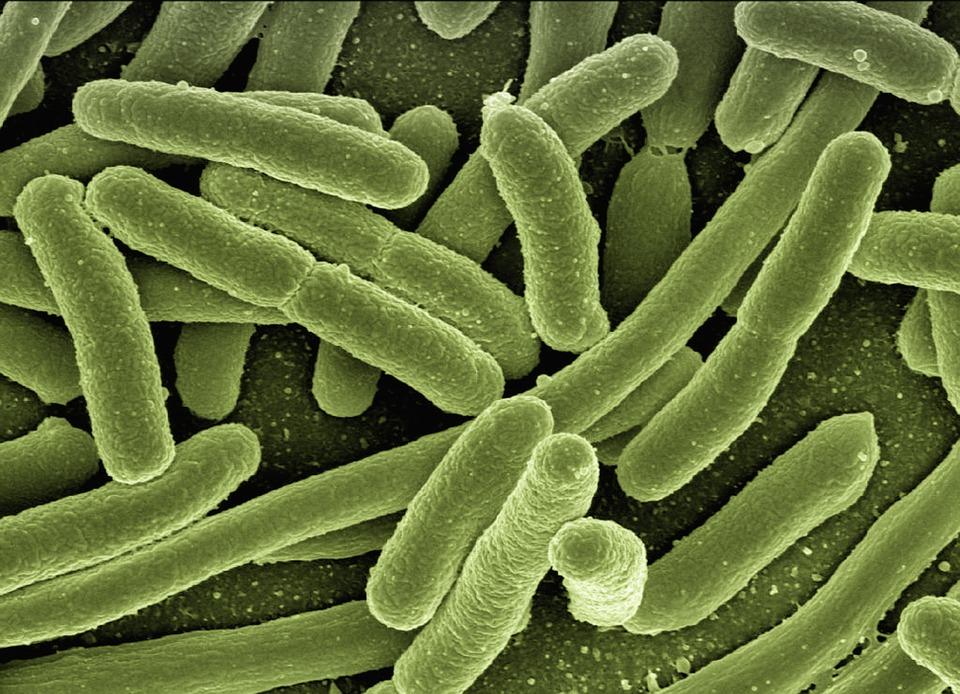 Olomoučtí vědci objevili zásadní způsob vylepšení antibiotik