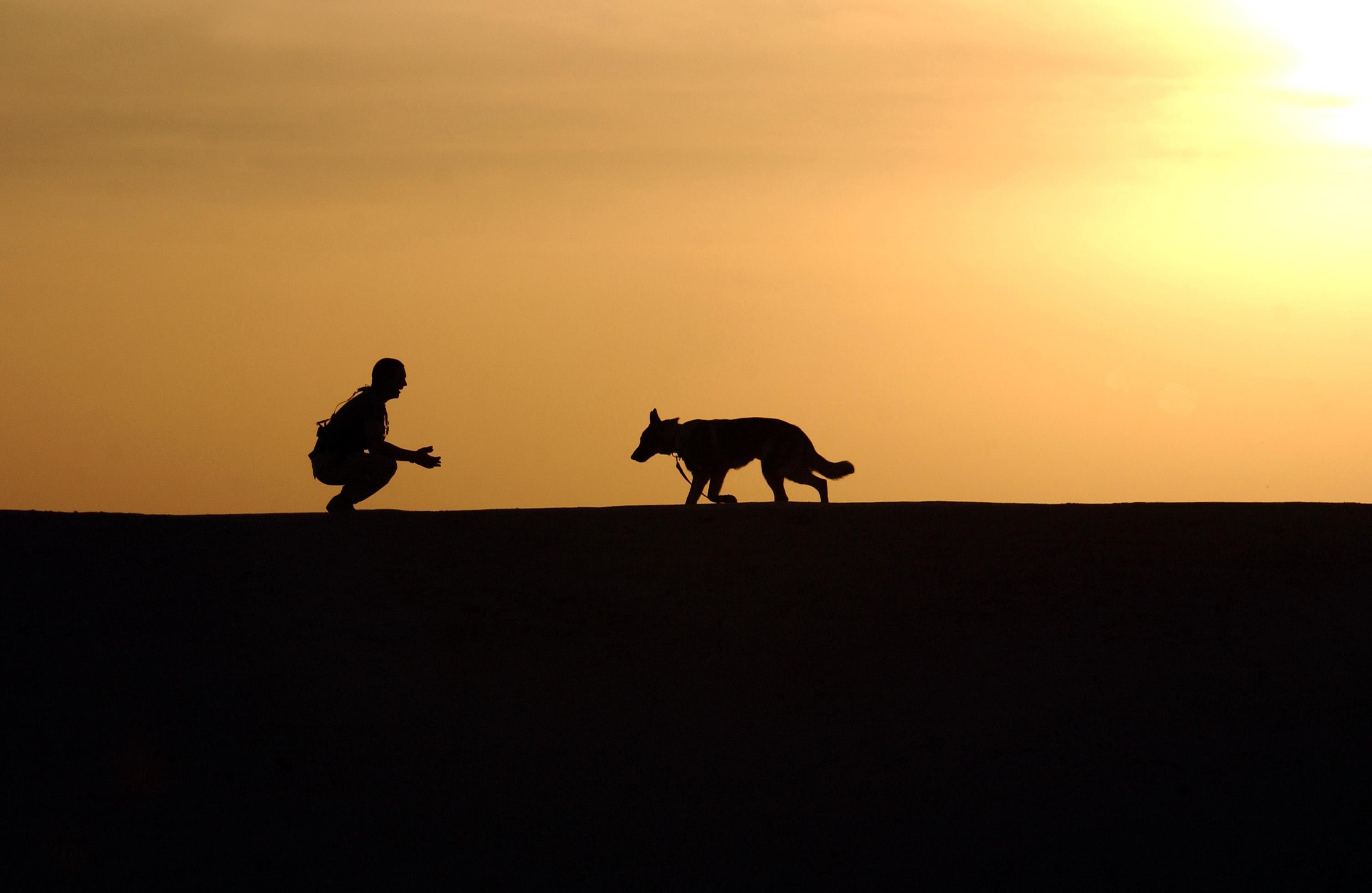 Pes jako přítel člověka. Archeologové nalezli první případ blízko českých hranic