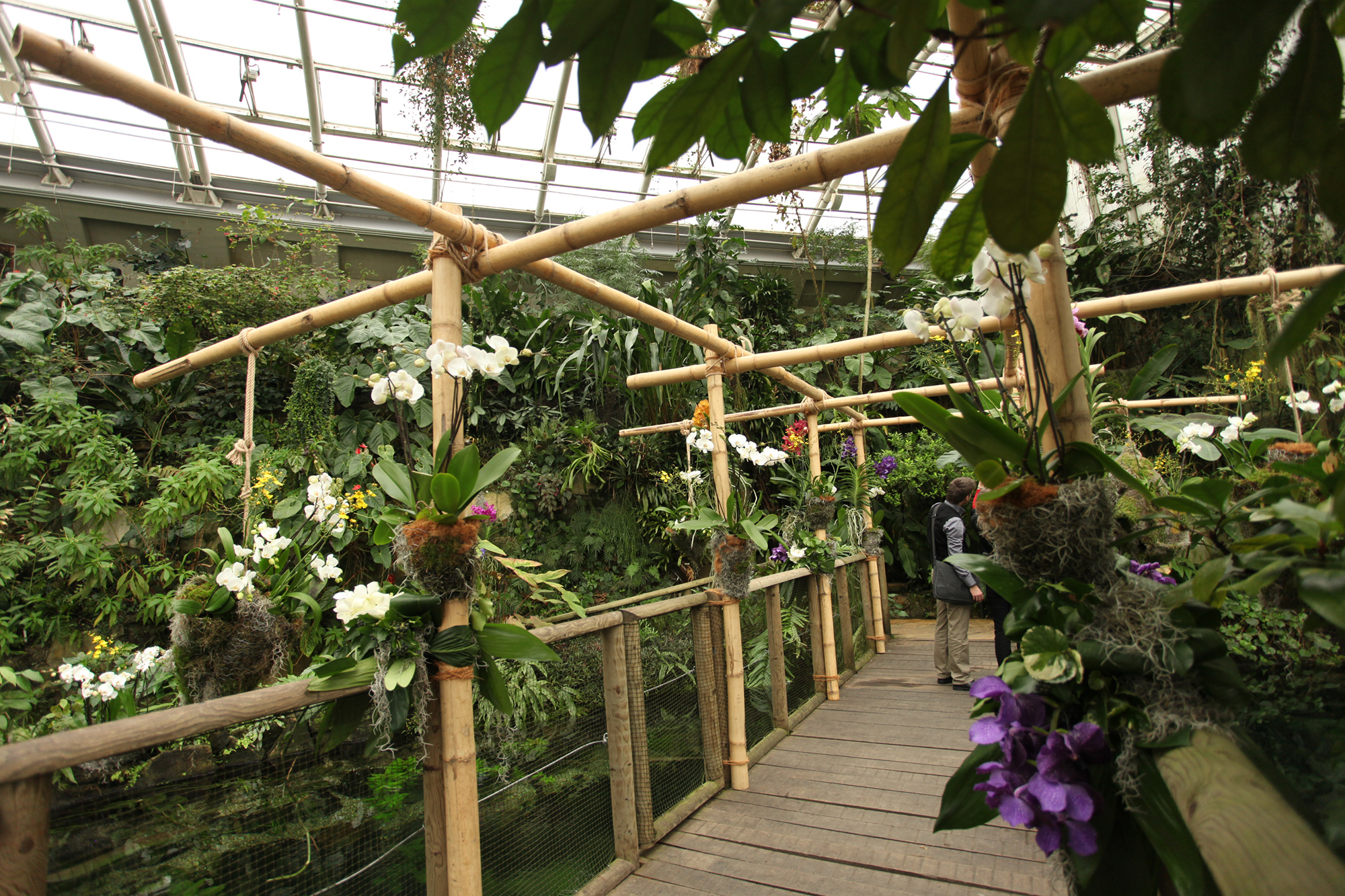 Pražská výstava orchidejí představí nejvzácnější druhy
