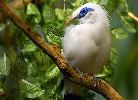 Sbírka starých dalekohledů pomáhá ochraňovat indonéské ptactvo