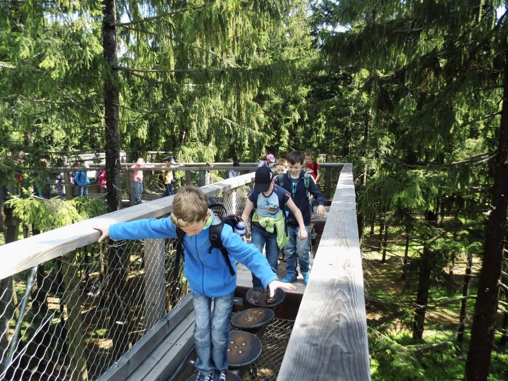 Pozorování ptáků, Králičí ostrov i zábavní park. Lipenská stezka korunami stromů se rozrůstá