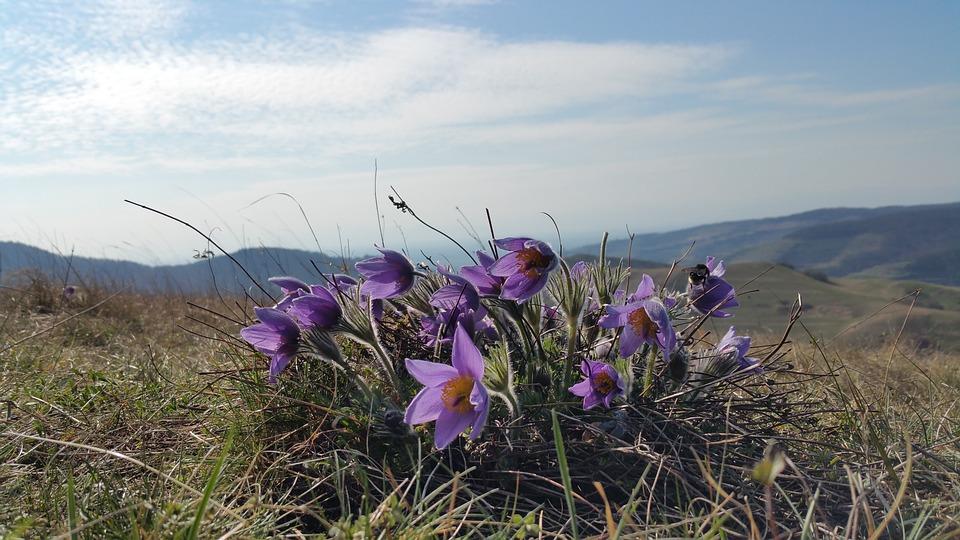 Nová databáze obsahuje veškeré dostupné informace o českých rostlinách