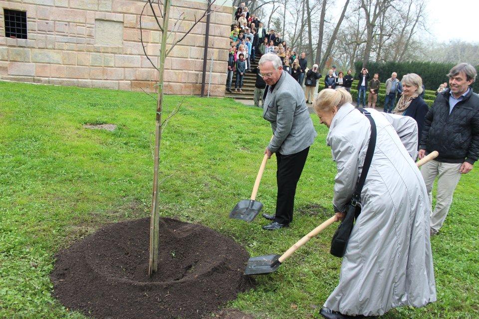 V rámci Roku Olgy Havlové se po Česku vysází 85 stromů