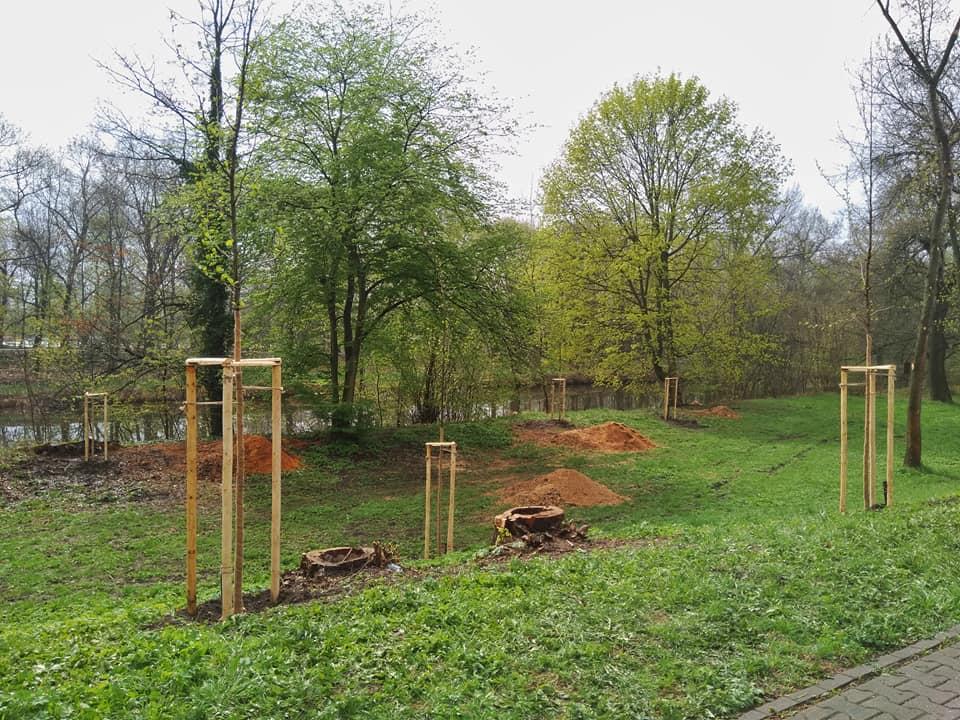 Hradec Králové je zelenější. Vedení města tam nechalo vysázet přes sto stromů