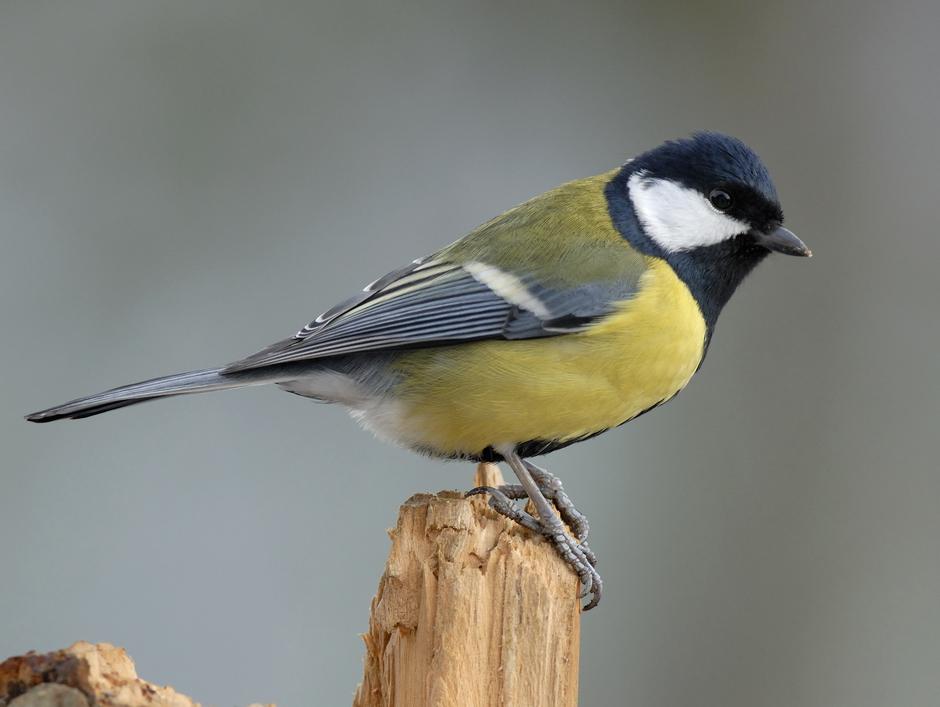 Češi mohou díky novému projektu sledovat život ptáků online