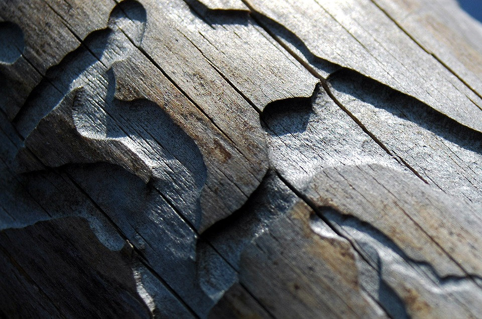 Čeští lesníci testují účinnou látku proti kůrovcům