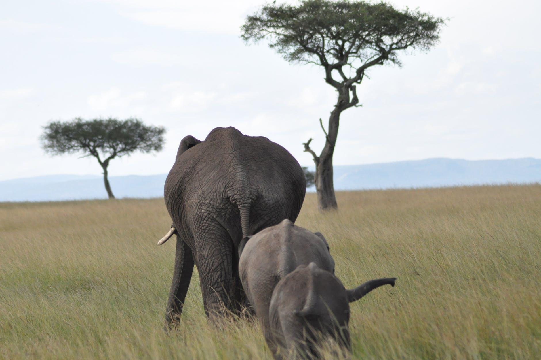 Kampaň ostravské zoo bojuje proti obchodu se zvířaty