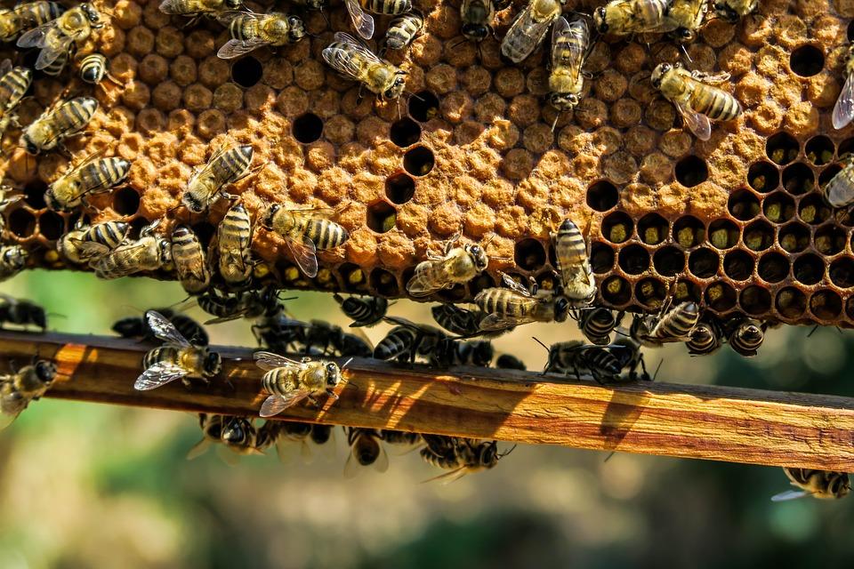 Trojská botanická zahrada zahájila netradiční výstavu věnovanou včelařství