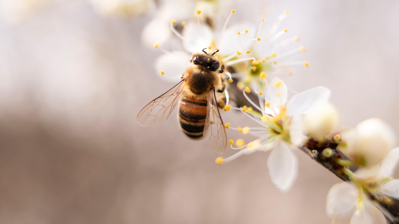 Dva farmáři bojují proti úhynu včel vlastní iniciativou. Pěstují rostliny pro milion včel