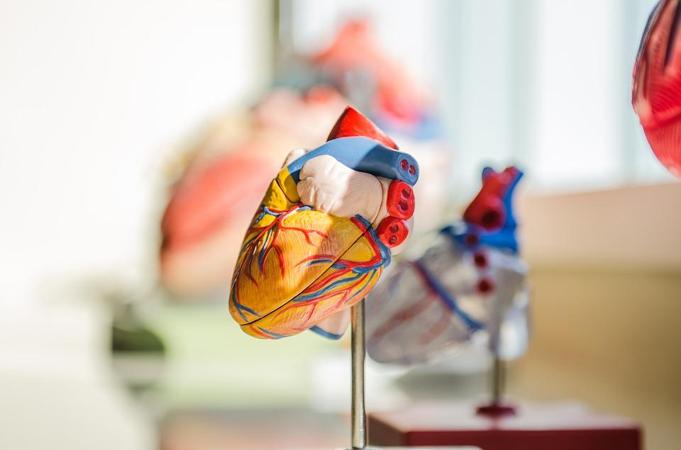 Světový úspěch české medicíny: IKEM se stal školicím centrem pro operace s umělým srdcem