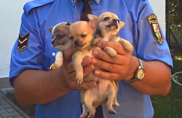 Plzeňští strážníci pořídili dárky opuštěným zvířatům