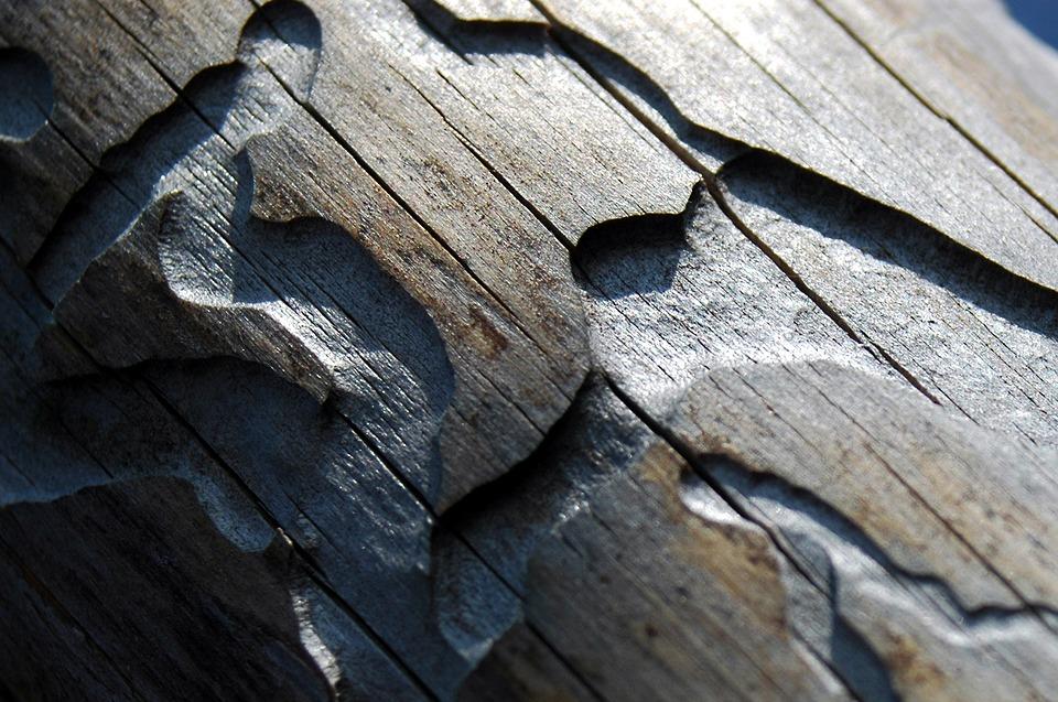 Les se po kůrovcové kalamitě dokáže přirozeně obnovit. Potvrzuje to projekt NP Šumava