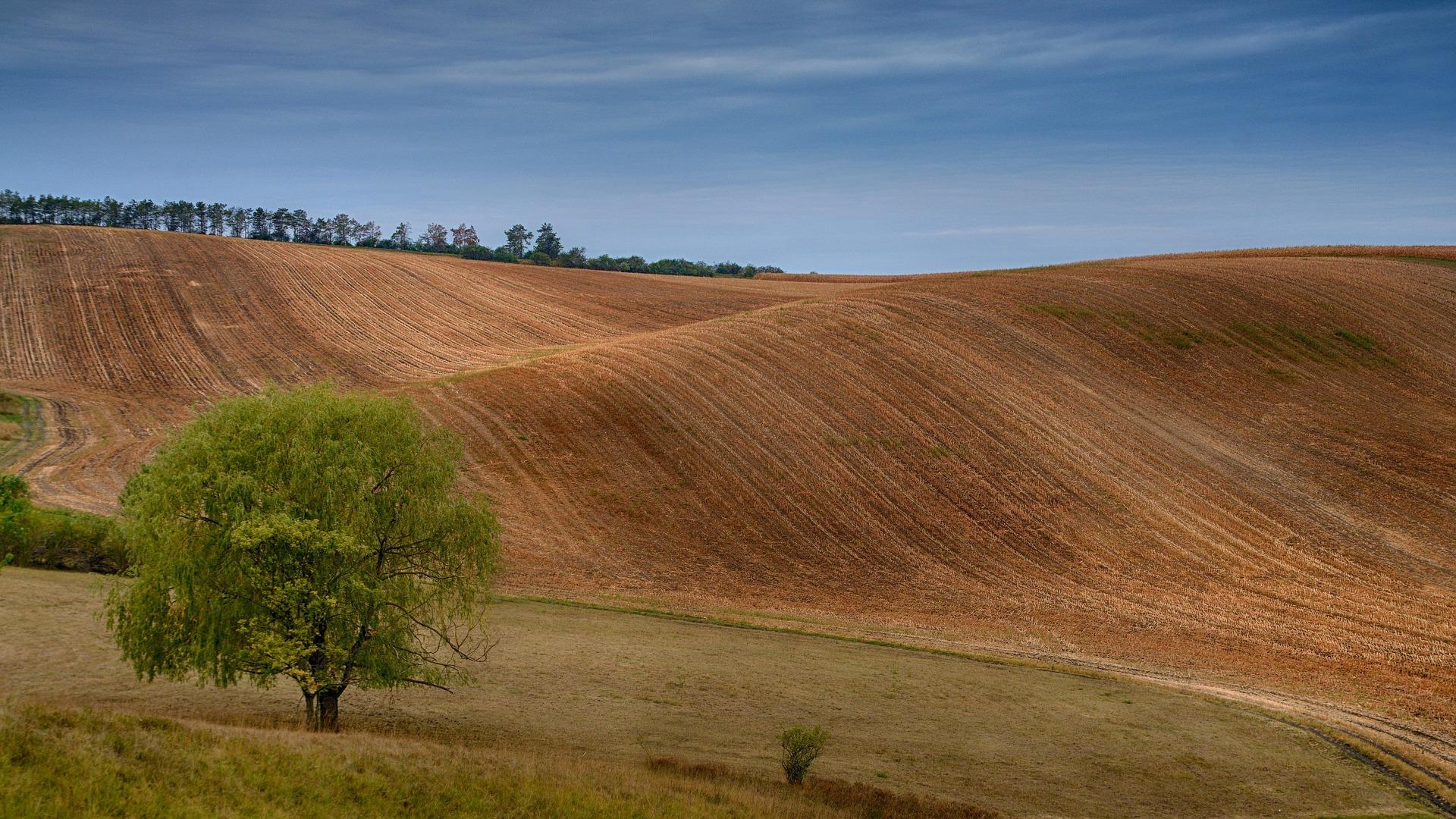 Stát od ledna zakáže plošné využívání škodlivého herbicidu glyfosát