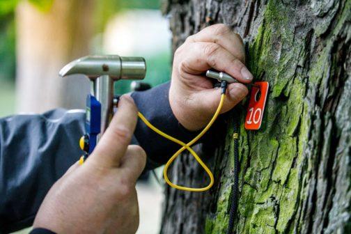 Češi se lépe starají o stromy. Do údržby investují stamiliony