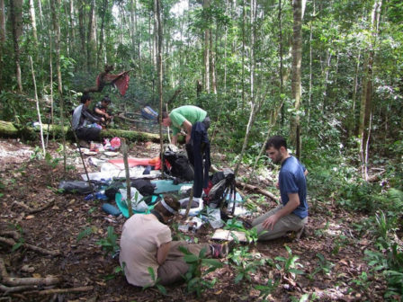 Olomoučtí biologové našli novou rostlinu. Může pomoci zachránit pralesy