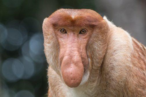 Šance na záchranu Balikpapanského zálivu na Borneu se zvýšily díky Zoo Praha
