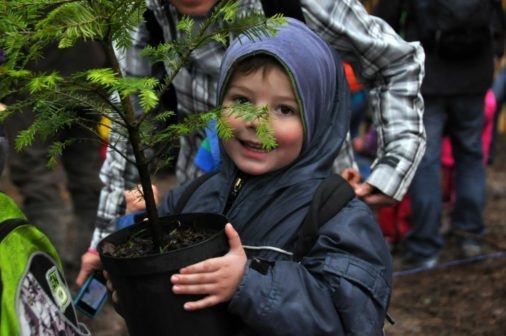 Vánoční stromky z květináčů vysadí Češi na jaře do přírody