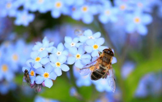 Polka vyrábí užitečný papír. Pomocí něj zachraňuje včely