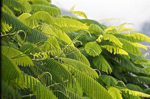 Vědci našli cestu k efektivnější fotosyntéze rostlin
