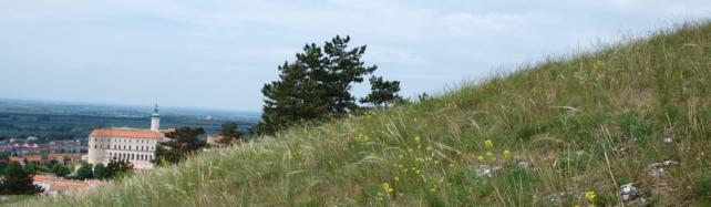Olomoučtí studenti vytvořili úspěšnou webovou encyklopedii české přírody