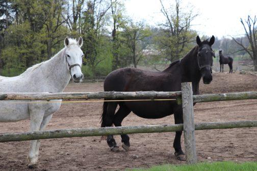 Projekt Stárneme spolu propojuje světy starších koní a lidí