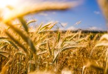 V Česku se obchodu s biopotravinami daří, počet ekofarem se ztrojnásobil