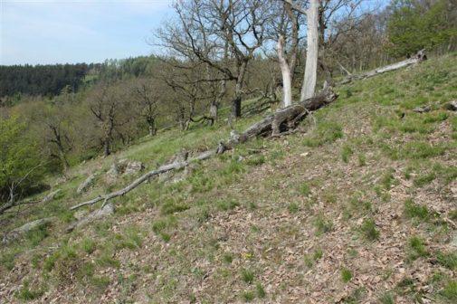 Kraj Vysočina má dvě nové přírodní rezervace