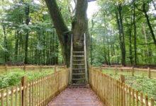 """""""Seznamovací strom"""" v Německu pomáhá lidem po celém světě najít lásku"""