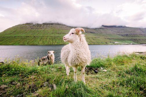 Faerské ostrovy se na víkend kvůli úklidu uzavřou turistům