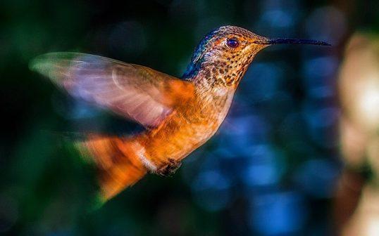 Plzeňská zoo jako jediná v Česku chová kolibříky