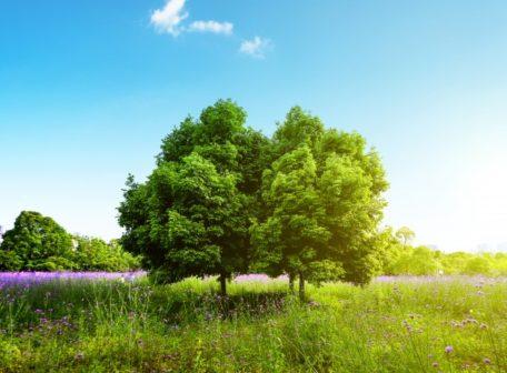 Jihomoravské obce a spolky mohou získat peníze na výsadbu stromů