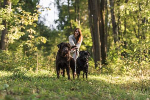 Novozélandských obřích procházek se psy se účastní tisíce lidí