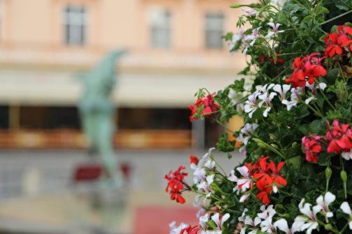 Olomouc v létě ozdobí dvojnásobné množství květin