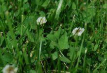 V Ostravě omezí sekání trávníků, aby podpořili návrat rostlin a živočichů do krajiny