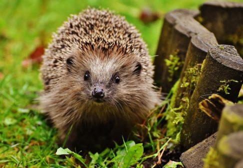 Záchranná stanice v Pavlově vypustila ježky i netopýry znovu do přírody