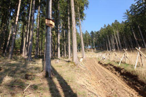 Budka pro netopýry od českého studenta nahradí mizející přírodní úkryty