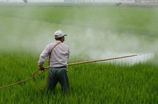 Česká města postupně končí s používáním herbicidů. Nově se přidal Hradec Králové