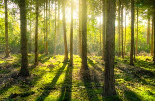 Praha má nový les, počet zelených ploch trvale narůstá