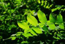 Ostrava získá díky dotaci zeleň, která pomůže se znečištěním
