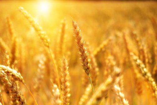 V Česku roste počet ekologicky hospodařících zemědělců