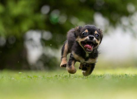 Podle studie českých vědců jsou majitelé psů zdravější