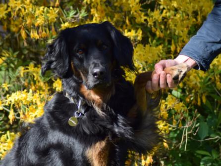 Projekt Červená tlapka pomáhá hledat dárce krve pro psy