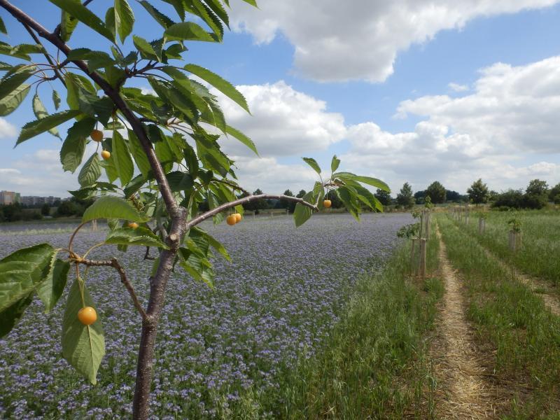 Praha hledá v zemědělství nové cesty, obnoví remízky