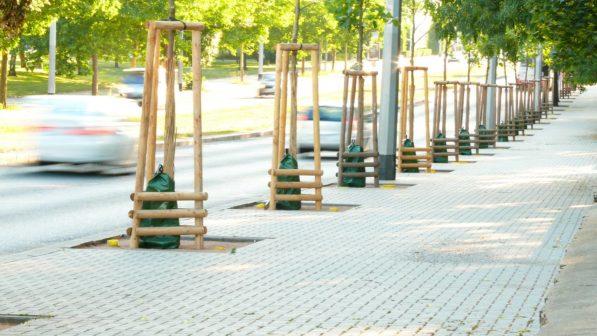 Mladé stromky potřebují speciální péči. Městům pomáhají zavlažovací vaky