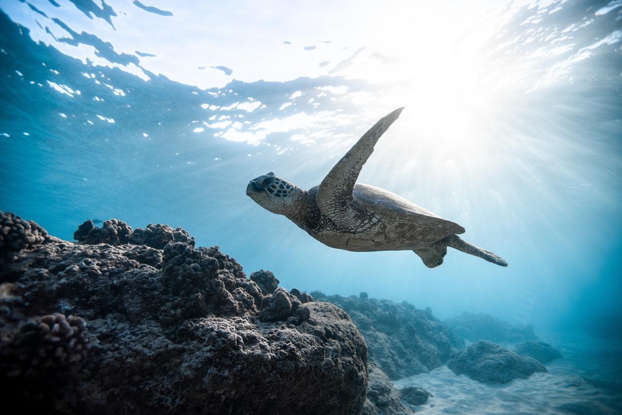 Na španělských plážích probíhá kampaň za záchranu ohrožených želv