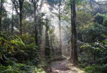 Indonésie vyhlásila trvalé moratorium na kácení lesů