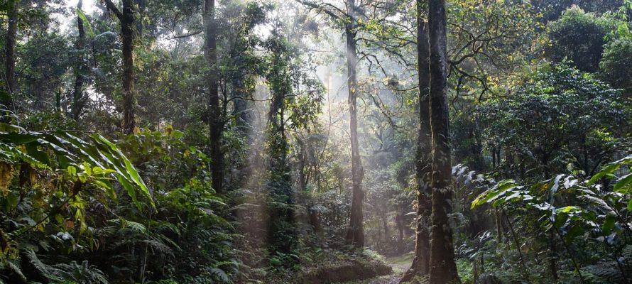 https://pozitivni-zpravy.cz/indonesie-vyhlasila-trvale-moratorium-na-kaceni-lesu/