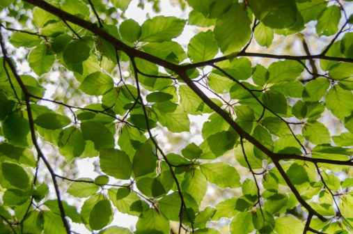Brněnské stromy dostaly čidla i speciální injektáž. Umožní efektivnější hospodaření s vodou