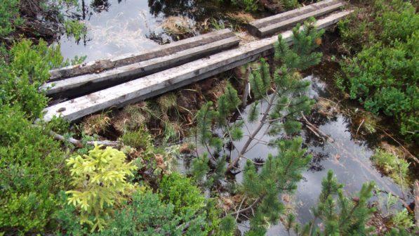 Šumavská rašeliniště pod rukama dobrovolníků opět ožívají